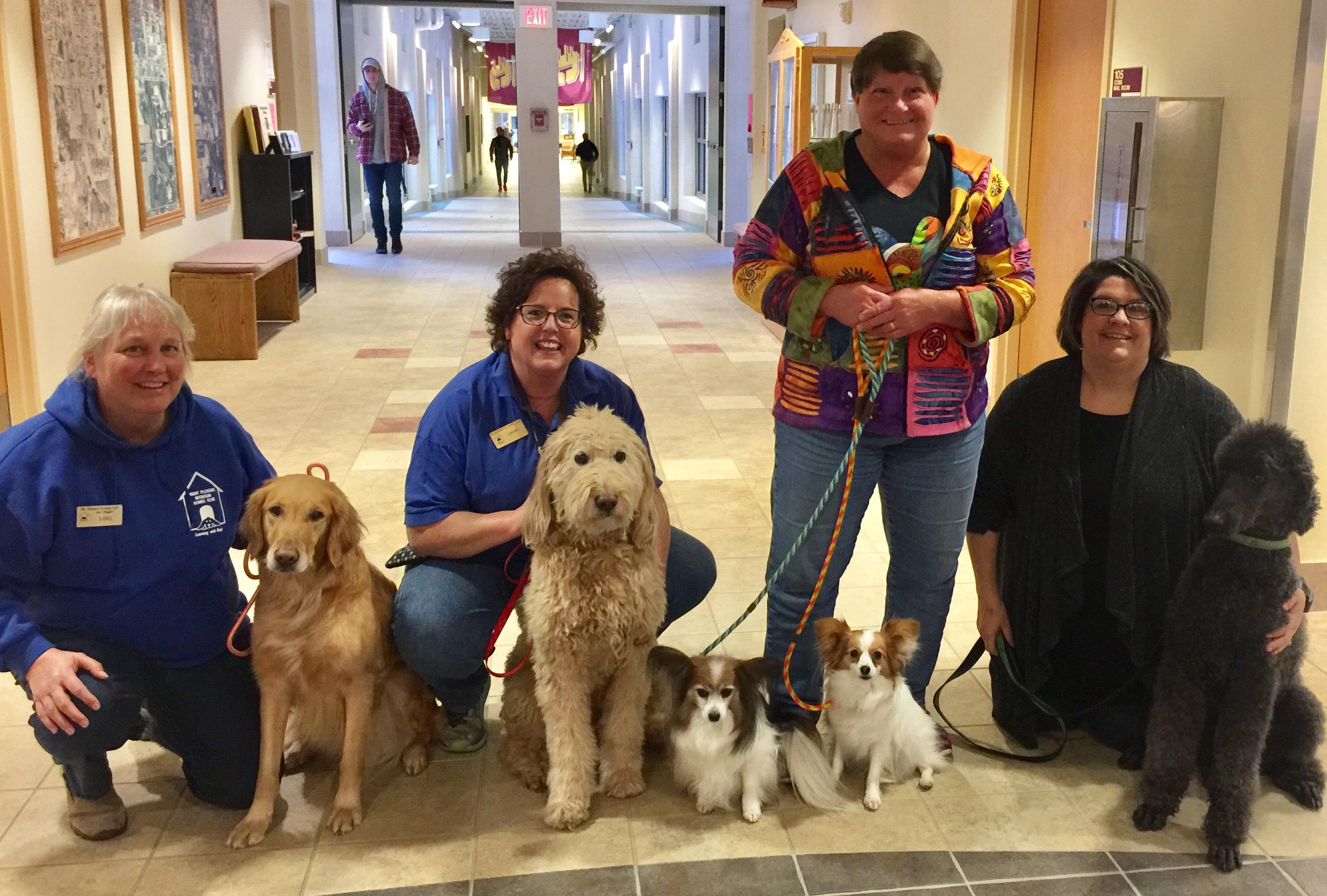 Dog Training In Mt Pleasant